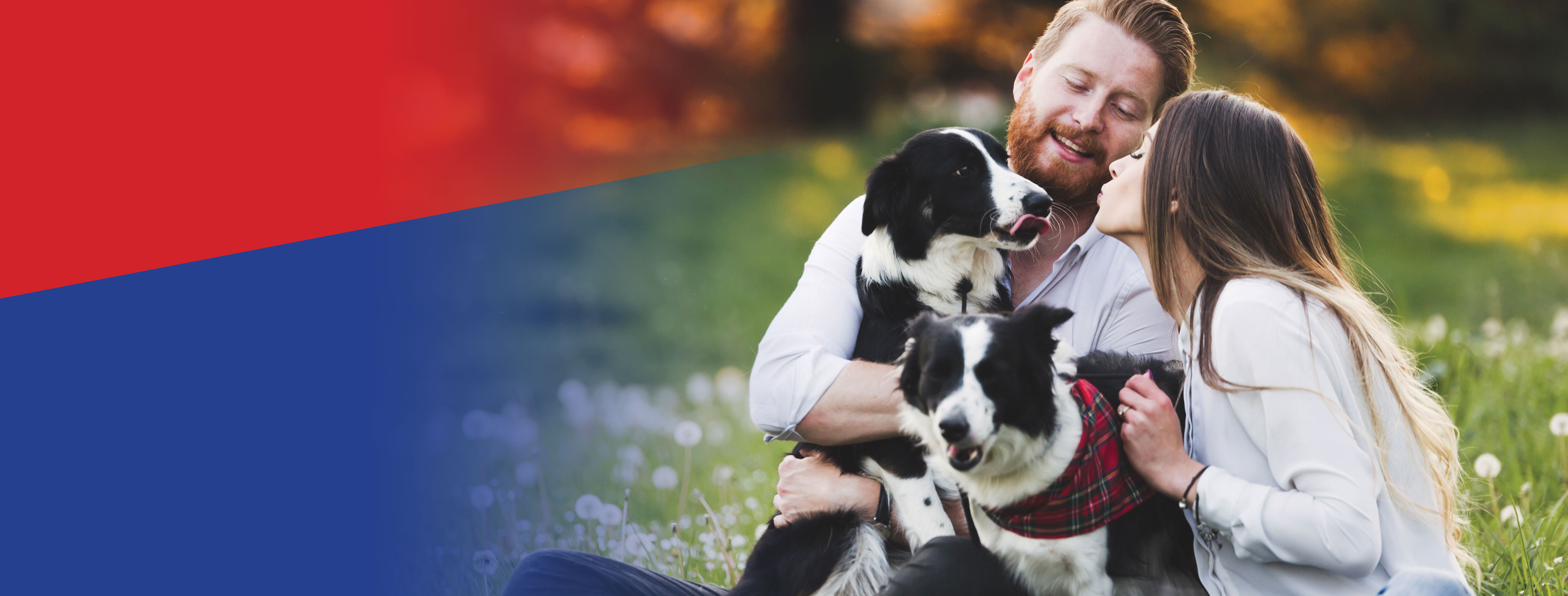 Pets Elite Dog Food and Treats